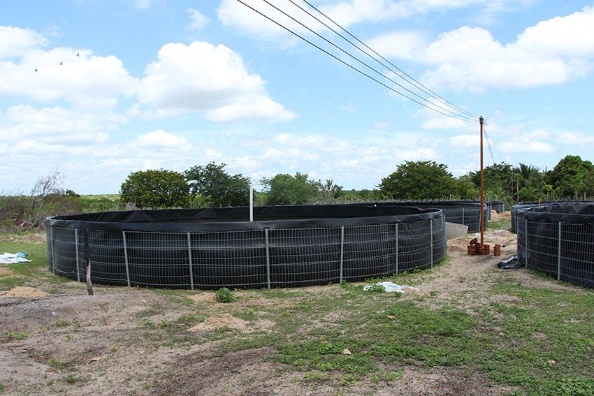 Tanques de criação de tilápia. (Foto: Jéssica Welma/Tribuna do Ceará)